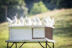 white doves 1524488 1280 ©Sabine Schulte / Pixabay
