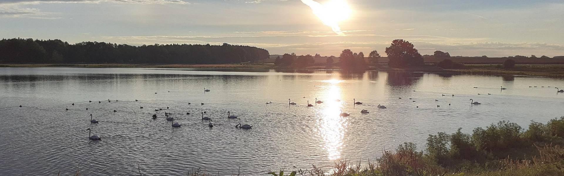 Plothener Teichgebiet - Blick auf einen der Teiche mit Schwänen zum Sonnenaufgang ©Landratsamt Saale-Orla-Kreis, Kerstin Täumel