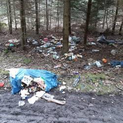 Im Wald illegal entsorgter Müll, breit verteilt, mehrere Müllsäcke